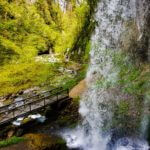 Gargantas de Kakueta, Selva de Irati 4