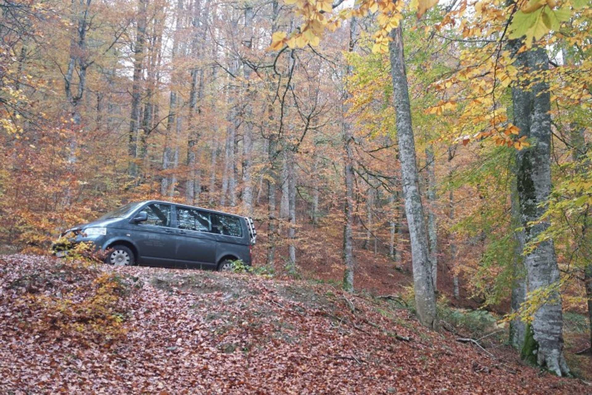 Rutas 4×4 en la Selva de Irati – Auñak Servicios Turísticos