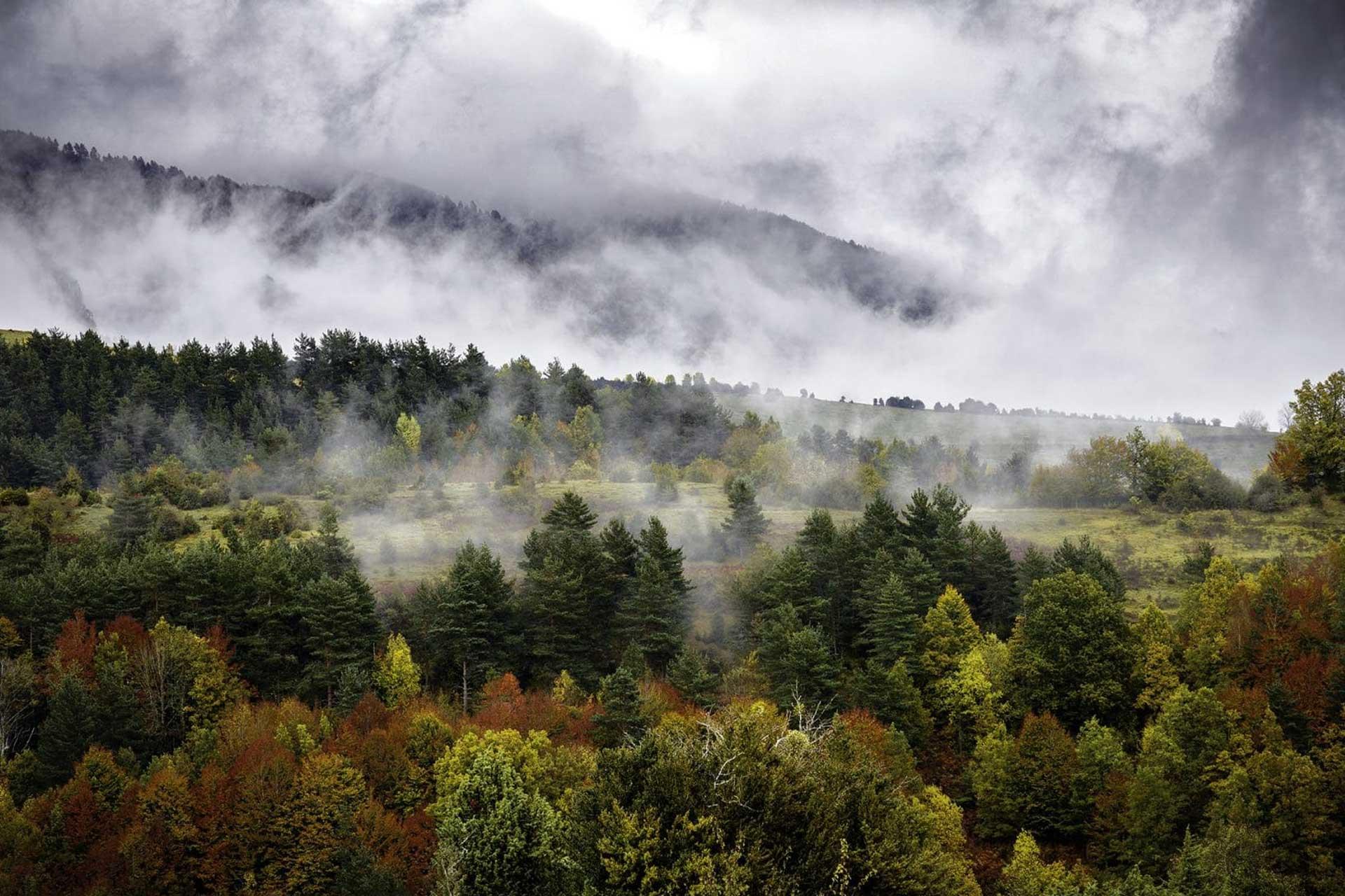 Protocolos de acceso a la Selva de Irati Otoño 2021
